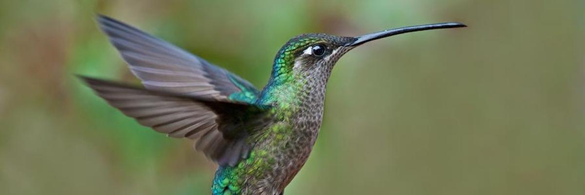 How_Google's_Hummingbird_Impacts_Your_SEO_Efforts.jpg