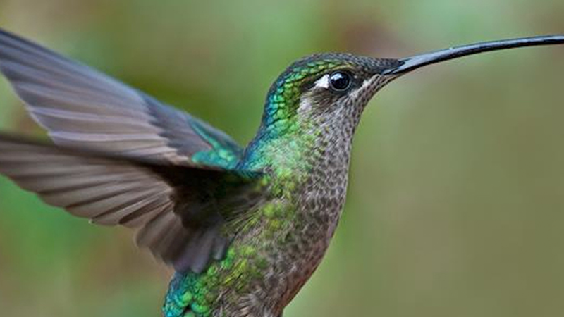How Google's Hummingbird Impacts Your SEO Efforts - Featured Image